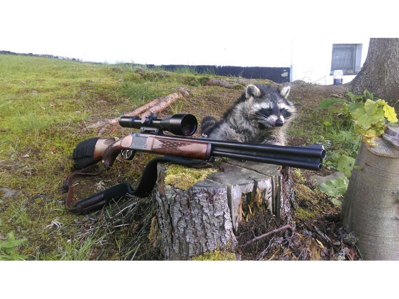 Zielfernrohr Mit Entfernungsmesser Xxl : Waschbär ansitzjagd in hessen jagdreisen jagdgelegenheiten